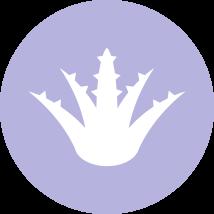 oi-ingredients-aloe-lavender.png